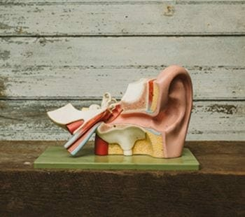 vintage ear diagram